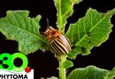 Phytoma-España convoca dos concursos del cambio climático en la agricultura