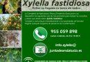 Información sobre la bacteria Xylella fastidiosa