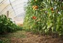 Agricultura destina 30 millones de euros a las nuevas ayudas del Plan Renove de Invernaderos