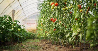 Ingenieros agrícolas reclaman cambios legales para garantizar la seguridad alimentaria de frutas y hortalizas