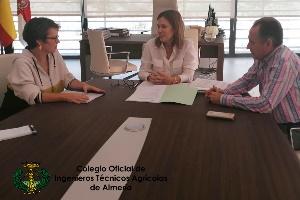 El colegio de ingenieros agrícolas justifica con un informe técnico la permanencia del arbolado en la Plaza Vieja
